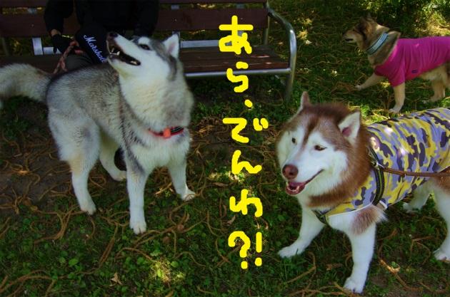 BAAA3388.jpg