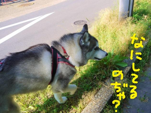 P2110472(1).jpg