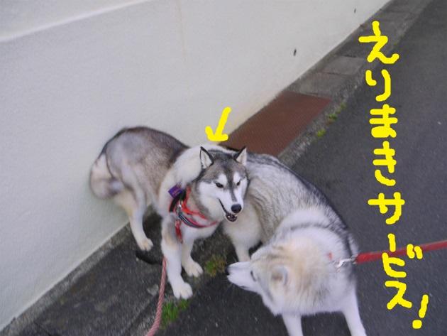P2110512.jpg