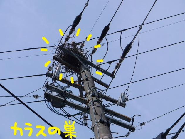 P2110579.jpg