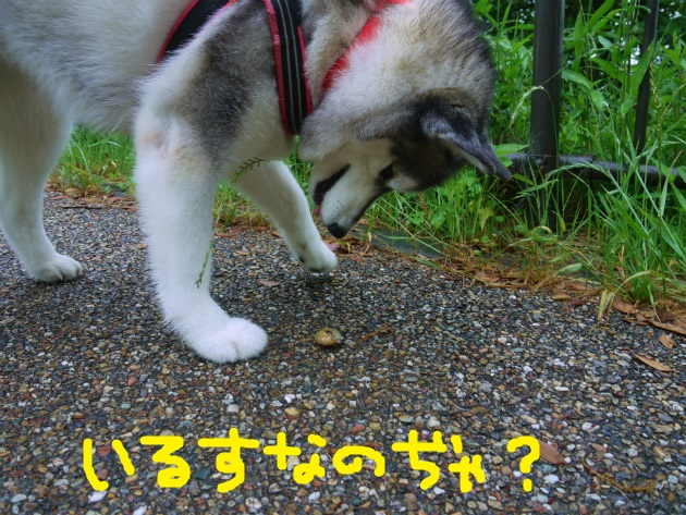 P2110693.jpg