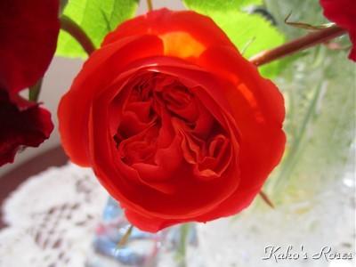 s-IMG_3870k30.jpg
