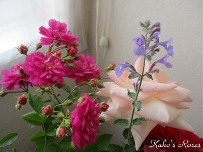 s-IMG_4574k30.jpg