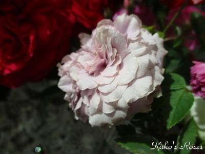s-IMG_4706k30.jpg