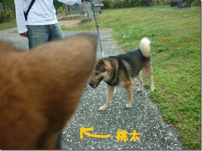 20170505カムイ桃太端午の節句01-04