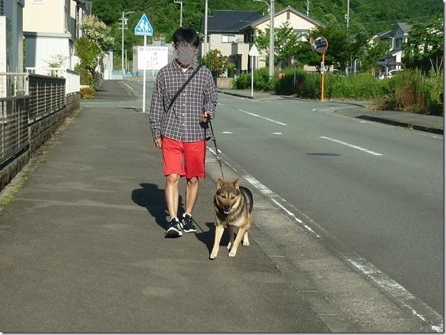 20170604今日の朝散歩-04