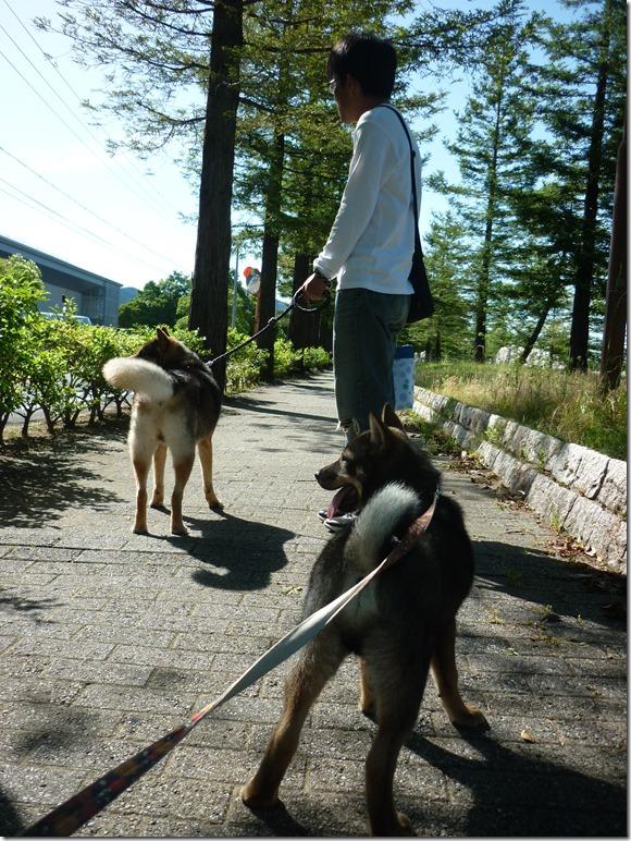 20170604公園散歩♪03