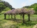 矢田自然の森02