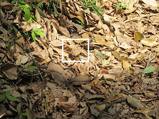 矢田自然の森12