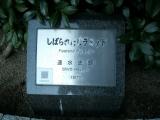 JR宇部新川駅 しばられたピラミッド タイトル