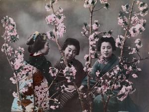 シドモア 日本女性と桜