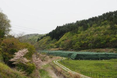2017.5.9 葛尾村 ぽこ&まちさん 1