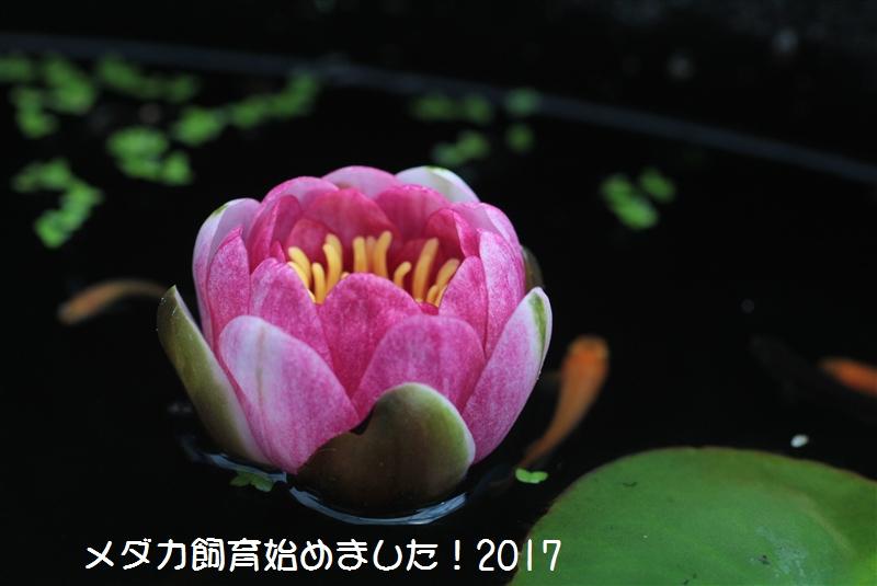 IMG_5160.jpg