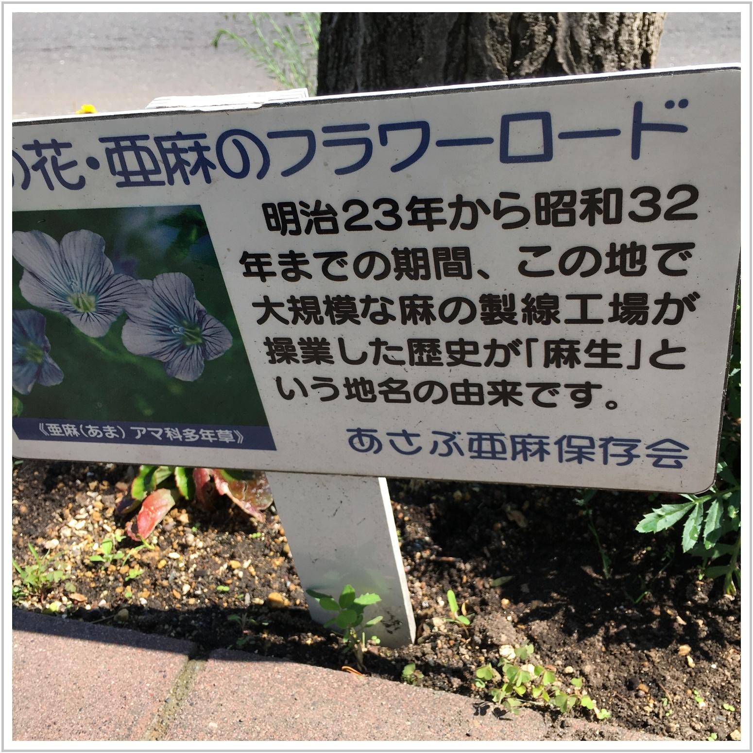 ama_1_610.jpg