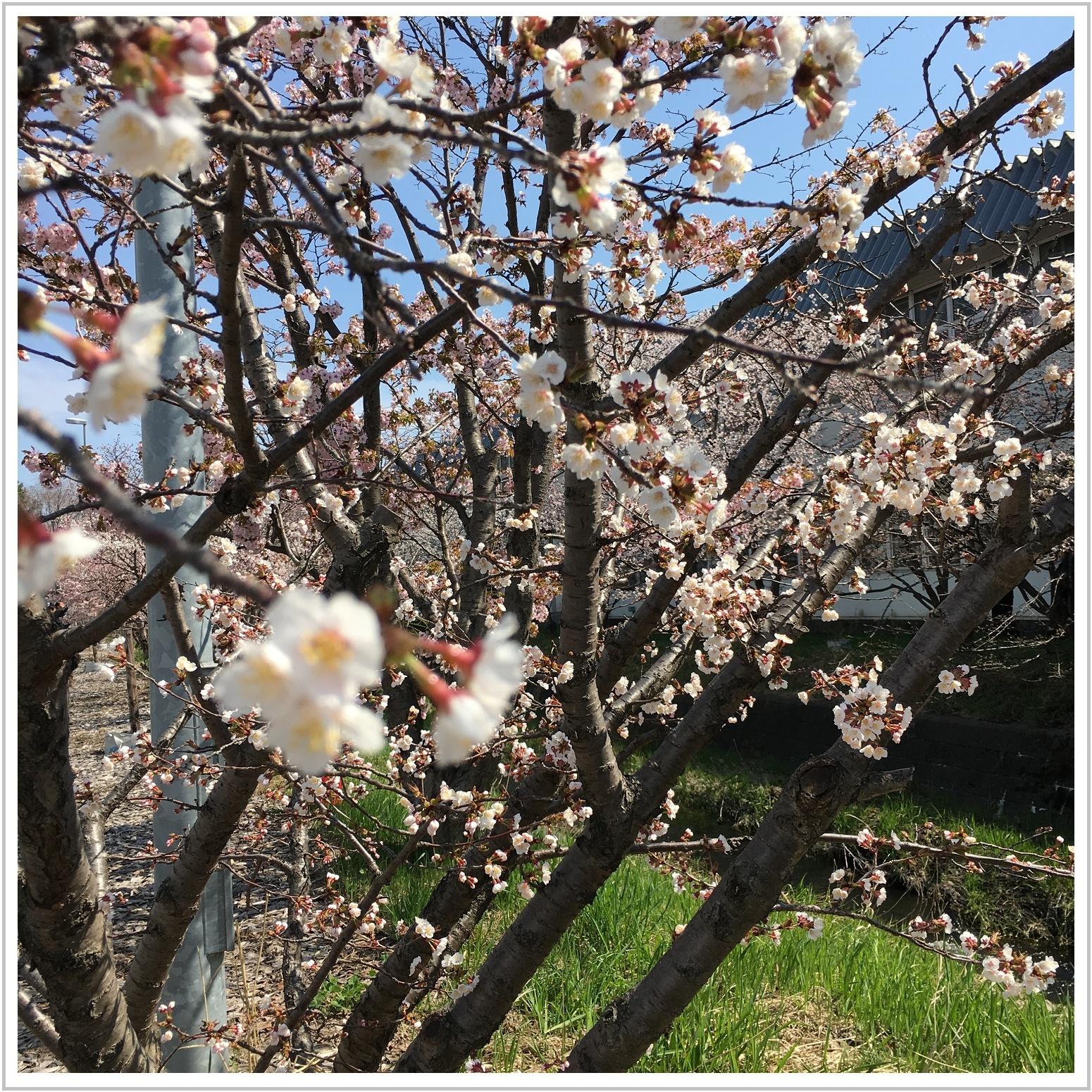chishima_11_502.jpg