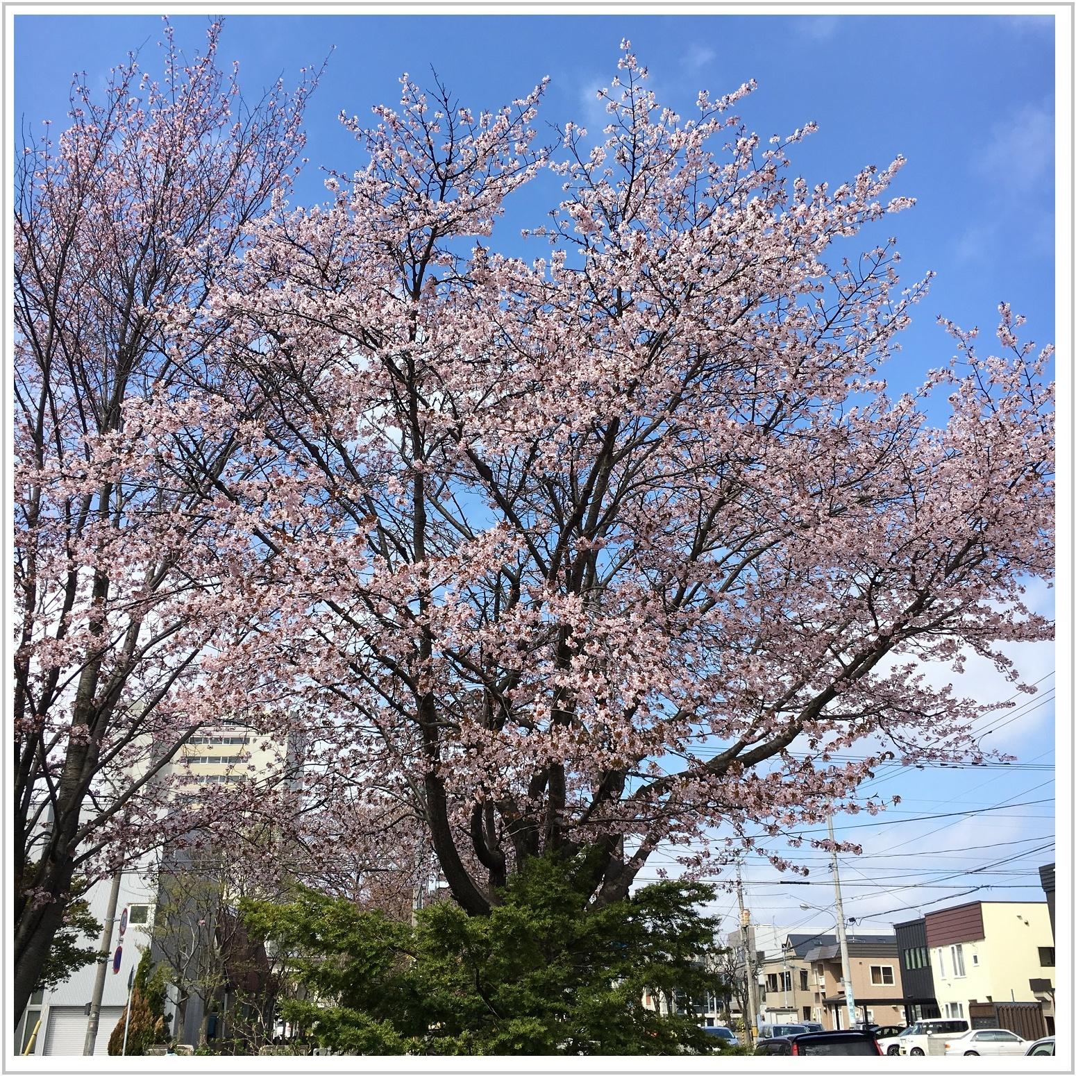 chishima_19_502.jpg