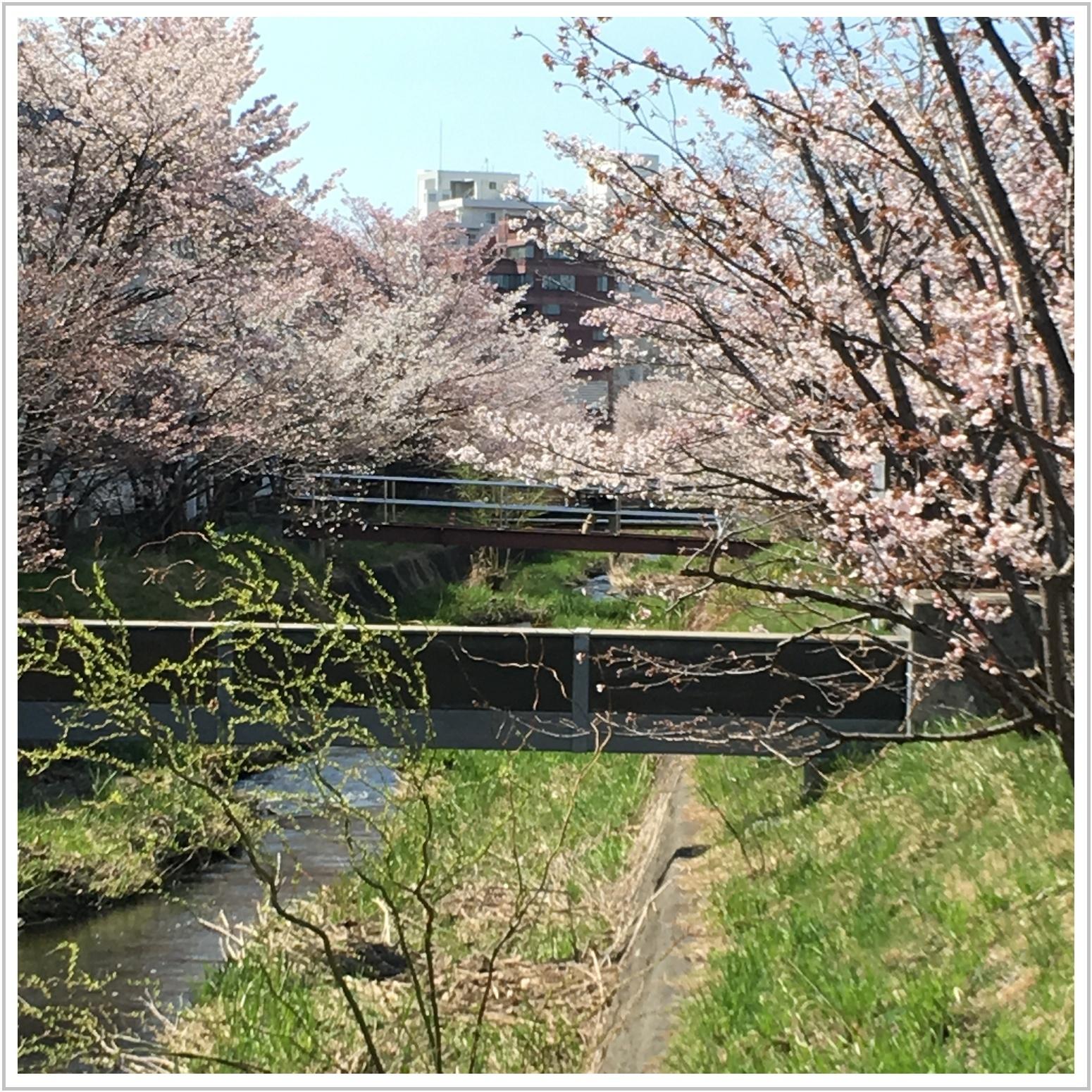 chishima_4_502.jpg