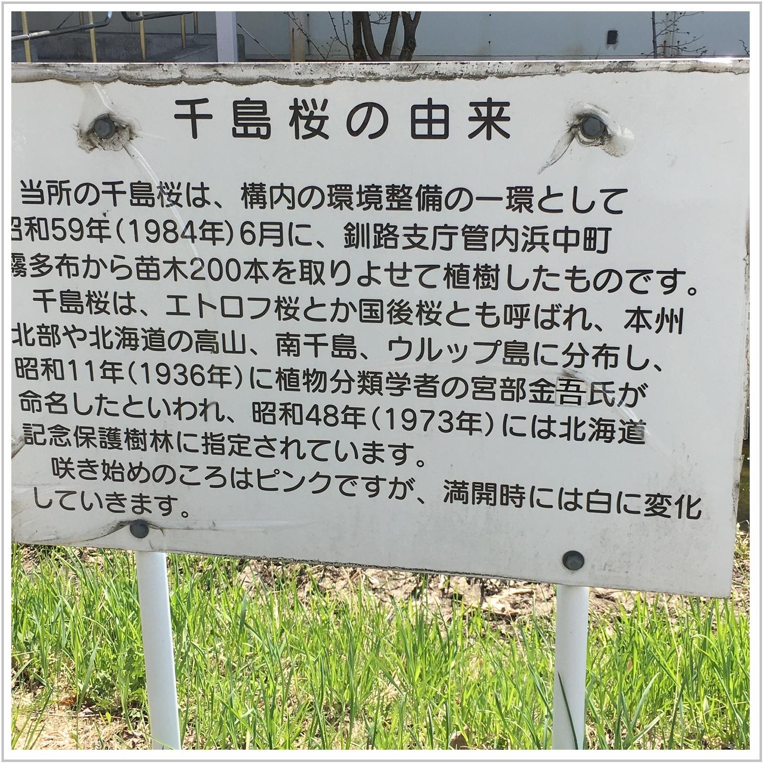 chishima_7_502.jpg