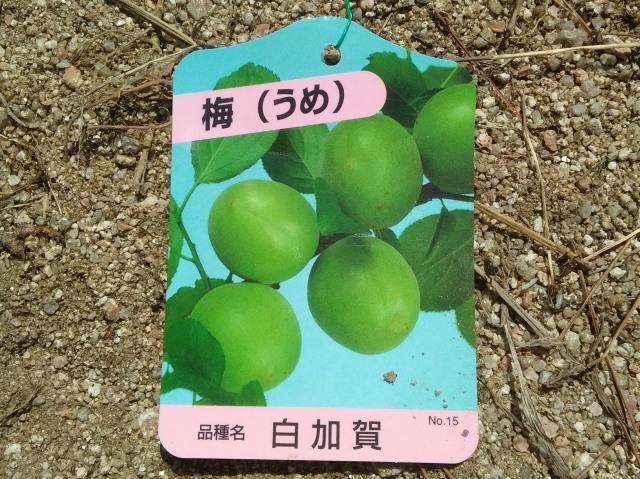 白加賀タグ0513