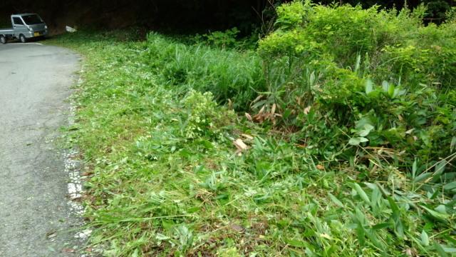 草刈り10708