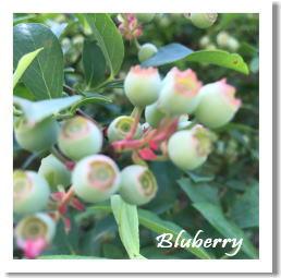 bluberry20170526.jpg