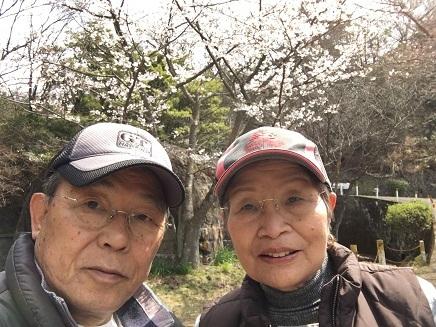 4022017 大空山桜S1