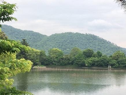 5242017 薬師寺高野山ツアー大覚寺池S7
