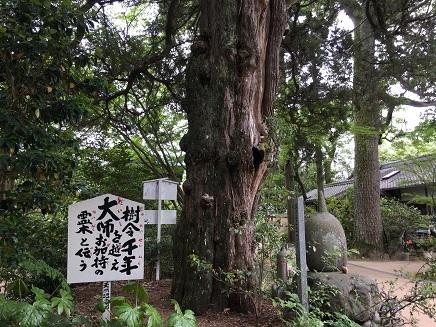 5122017 46番浄瑠璃寺樹齢千年霊木S7