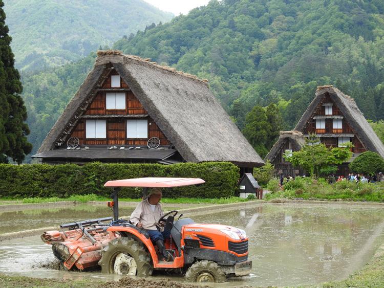 白川郷の田んぼに囲まれた静かな時間をお過ごしください ①