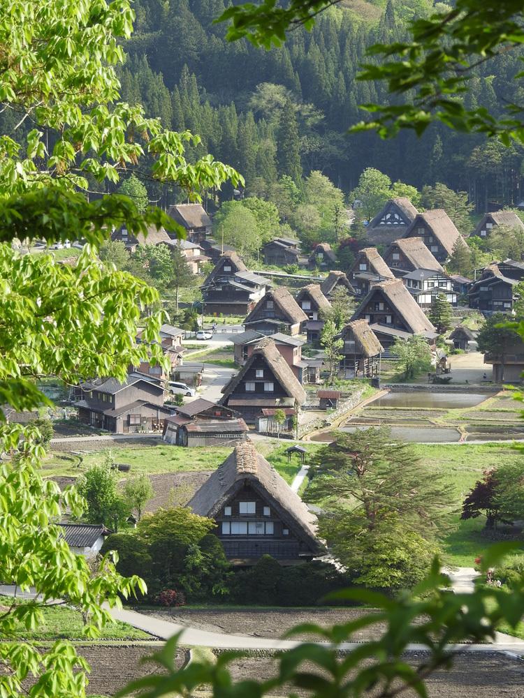白川郷の田んぼに囲まれた静かな時間をお過ごしください ⑥