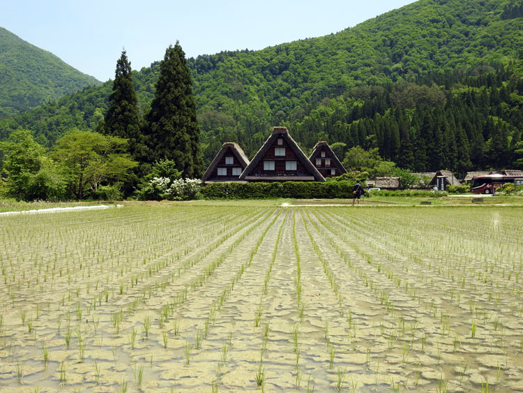 初夏のご旅行は世界遺産 白川郷で 3