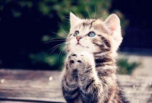 子猫の祈り