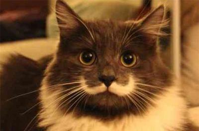 白いひげを生やした猫