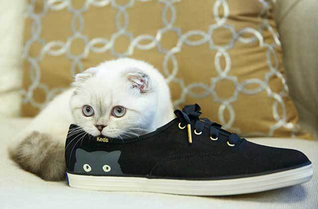 taylor-swift-keds-sneaky-cats.jpg