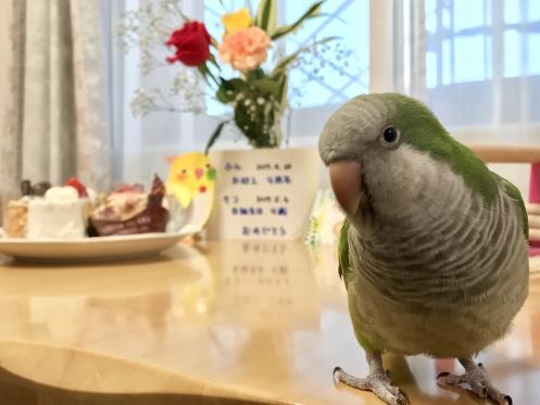 20170506_mocoお誕生日記念