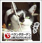 Banner_gardeningRock.jpg