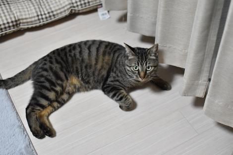 ☆DSC_0749 (1)thum