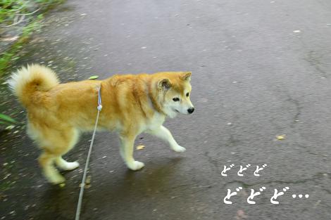 ☆DSC_0034 (1E)thum