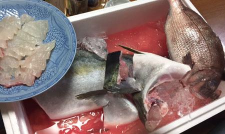 雅之が釣った魚