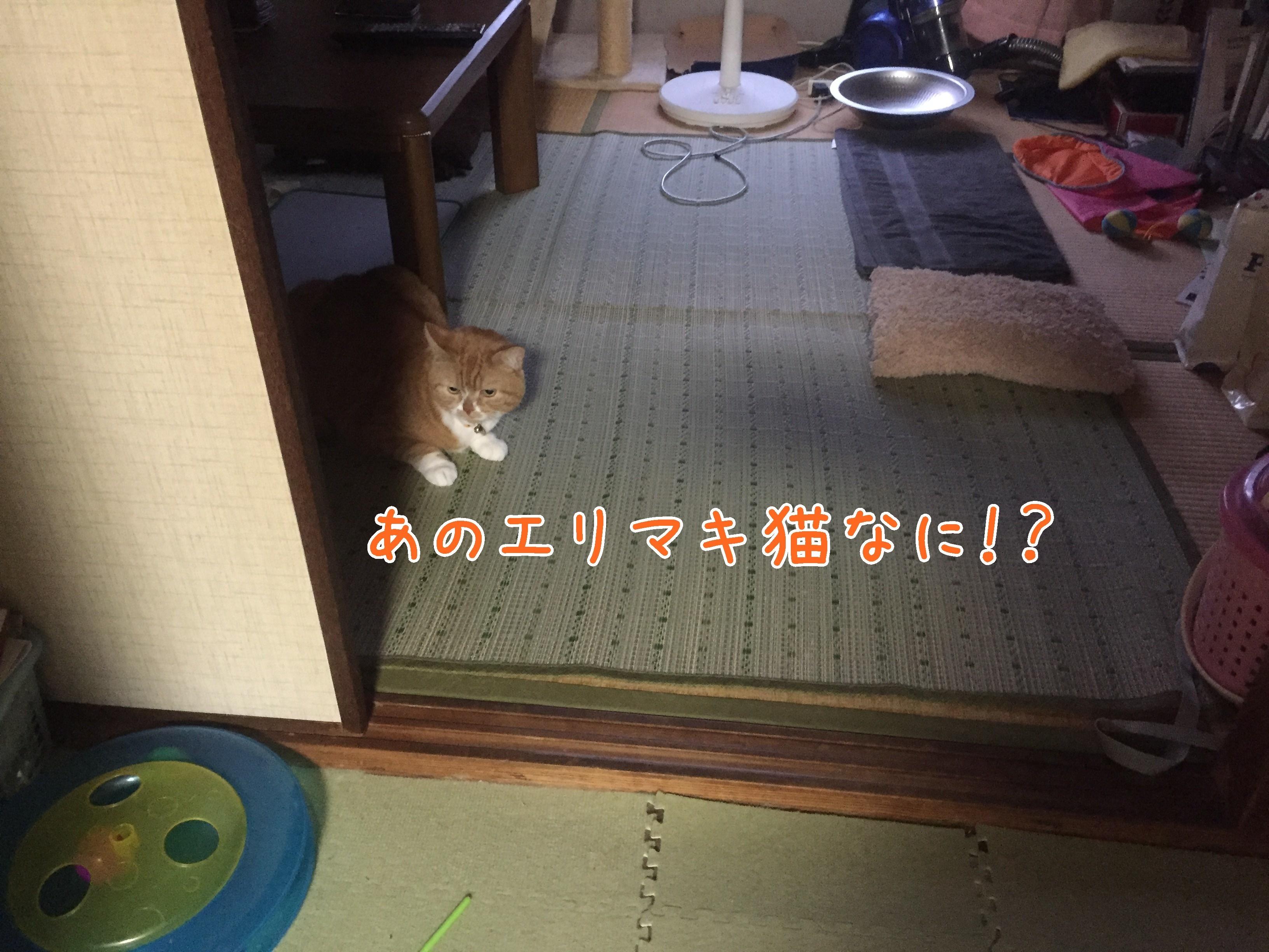 20170610-185904-01.jpg