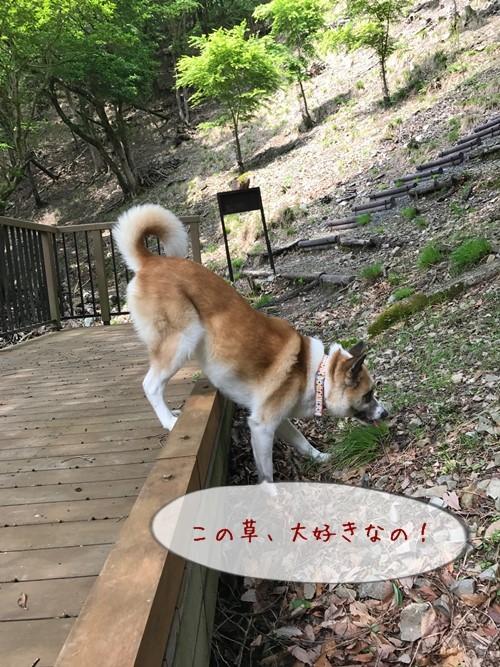 妙見山02
