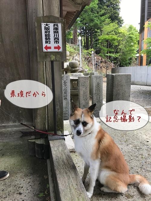 妙見山09