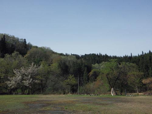 170509 サクラ並木