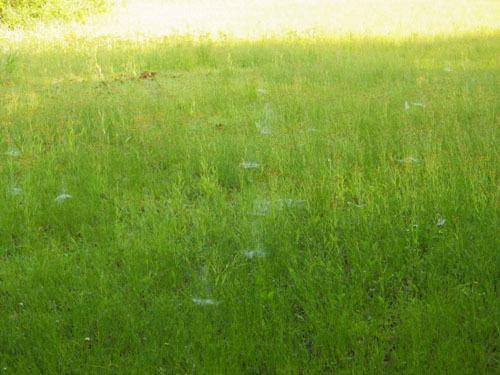 170615 クモの巣トラップ3