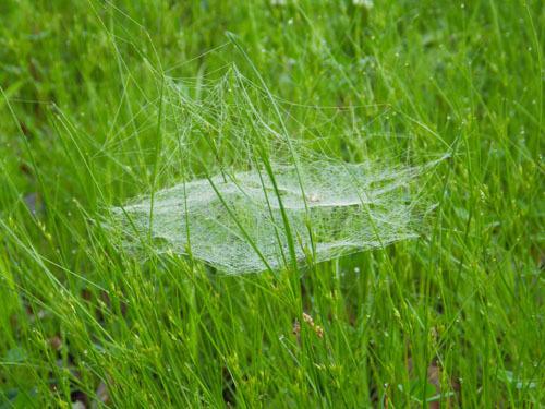 170615 クモの巣トラップ2