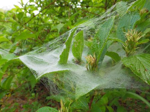 170615 クモの巣トラップ6