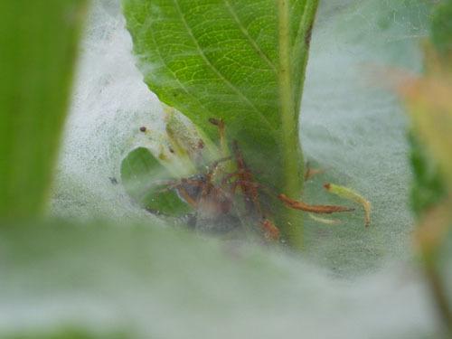 170615 クモの巣トラップ5