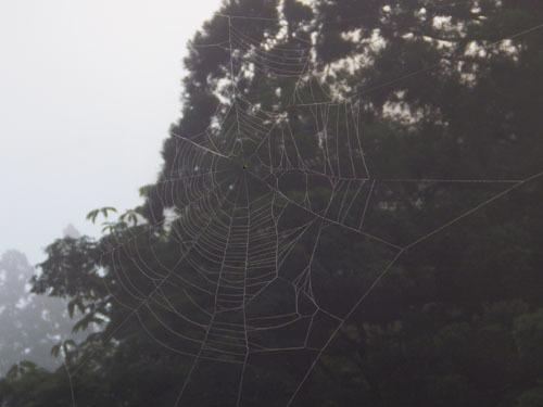 170615 クモの巣