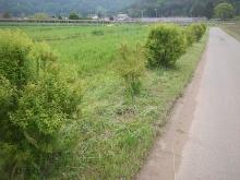 kusakari (3)