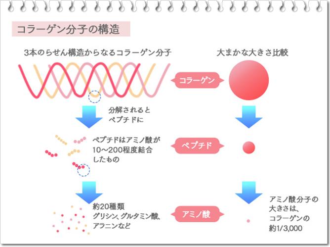 天使のベビーコラーゲン コラーゲン分子の構造